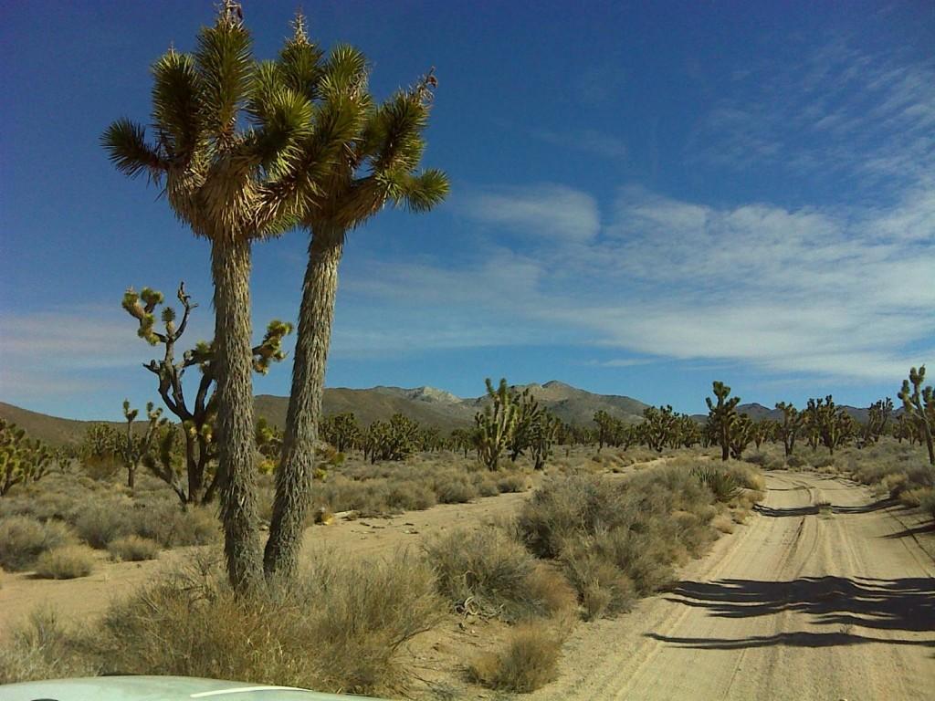 EMS, Eastern Mojave Scenic, trail marking 2010 015
